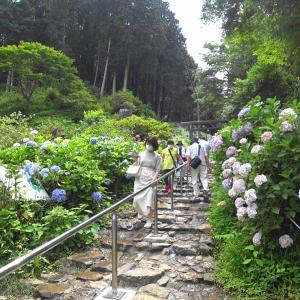 太平山アジサイ ライド 6/20(日) ③季節を感じた一日でした