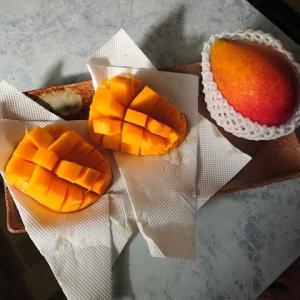 マンゴー美味しかった!!