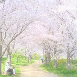 大鵬薬品北島工場遊歩道で桜を撮ってみた