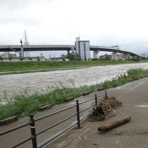 雨後の鴨川、鳥たちはどうなったのか?