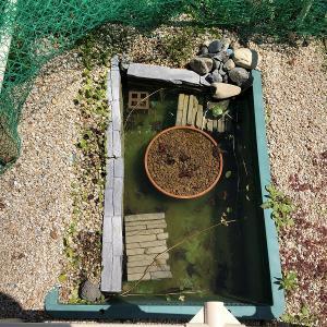 プラ舟ビオトープ(2021年 春の大掃除)