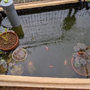 庭池の様子(2021年10月中旬~10月下旬)