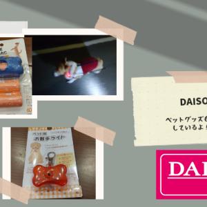 【100均失敗シリーズ】ダイソーのペットグッズコーナーで散歩用品を購入!買って1日で壊れる悲劇!