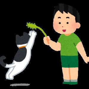 猫の本能を上手にくすぐろう!おもちゃに夢中にさせて遊ばせるコツ