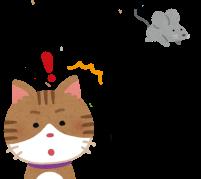 カワイイだけにとどまらない!猫の耳のハイスペックな機能を詳しく解説