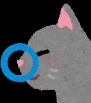 猫はニオイを制して情報を制す!猫の小さな鼻の機能性と大きな役割