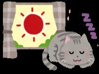 猫が大好き日向ぼっこ!その行動にある5つの大きな効果とは?