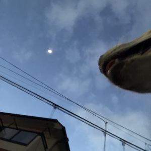 【ハナ*うちに来て132日目】巨大化?