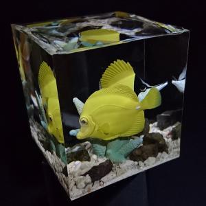 海のいきもの フエヤッコダイとキイロハギ ジオラマ SSea creatures Forceps fish and Yellow tang diorama