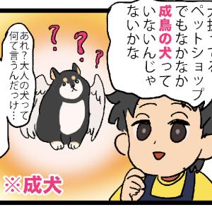 鳥専門ペットショップの職業病(?)