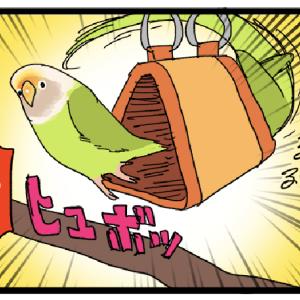 お店の鳥にプレゼントを贈ったら思ってたのと違う感じになってた