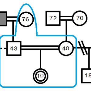 ジェノグラム(家族図)の練習