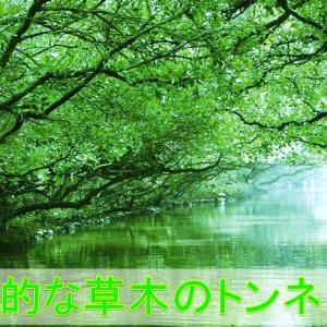 【台湾・台南】四草緑色隧道ツアー|幻想的な草木のトンネル|台湾のアマゾン!?