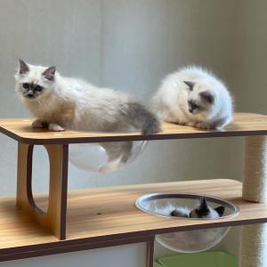 今日の子猫達 in 子猫部屋 タワー大好きニャン
