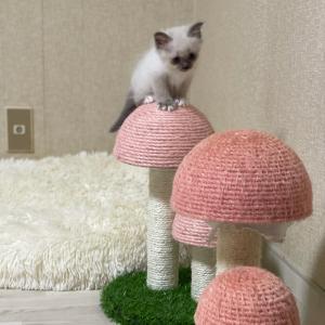 今夜の子猫達 in 子猫部屋 我家のヤンチャ   レベル