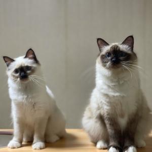 今夜の子猫達 in 子猫部屋 ピースフルなニャンズ
