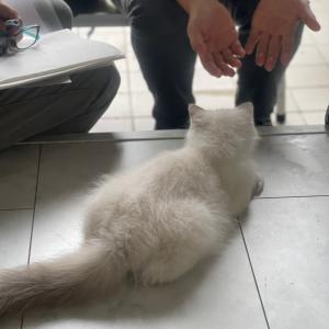 今日の子猫 in 新しいご家族のお迎え 行ってきますニャン