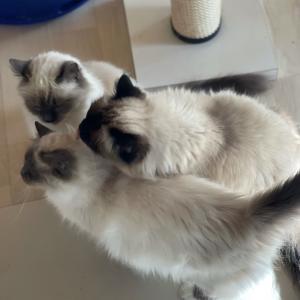 今朝の大人猫達 in 猫部屋 台風それてピーカン