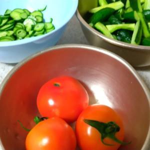 家庭菜園7月20日までの収穫記録。長雨の後の猛烈な暑さで夏野菜が記録的大収穫です!