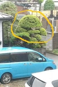 植木が顔みたいに