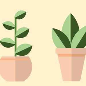 観葉植物を描く