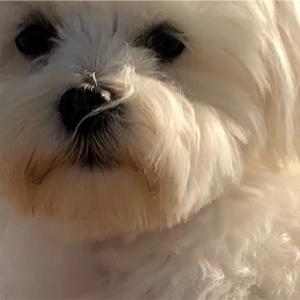 犬からのお願い
