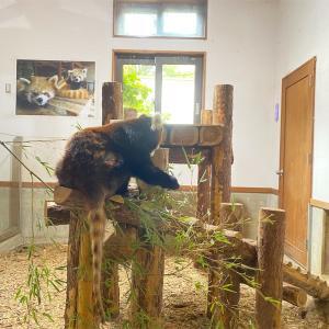 動物園にいこう! in 茶臼山動物園②