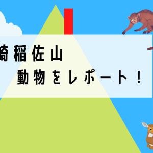長崎 稲佐山の動物園・猿と鹿を見てきた!新名物鹿せんべいを調査!