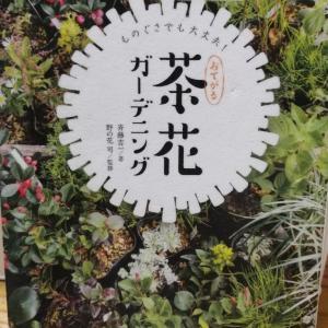 読書(茶花ガーデニング)