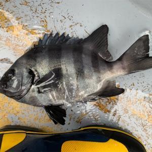 【釣行記】2020年の釣行を振り返る⑬2020.12.12 LTウィリー五目&アマダイ五目(腰越港・政美丸)