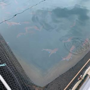 【釣行記】フィッシングパークTOI(2021.6.23 静岡県伊豆市土肥温泉)