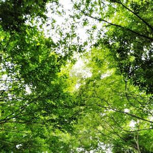 Rakuten Miniで近所の雑木林を撮ってみる