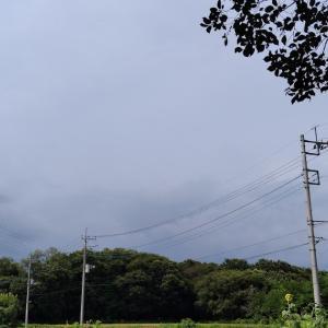畑日誌、雷にビクビクしながら草むしり