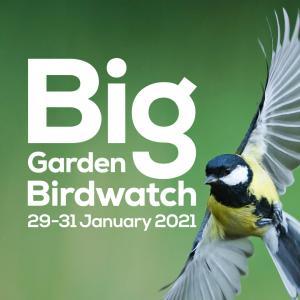 英国最大の野鳥観察イベント Big Garden Birdwatch に初チャレンジ!🐦