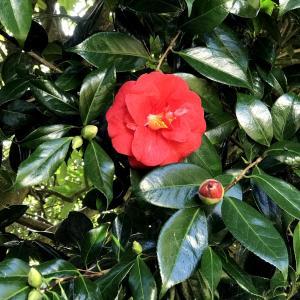 夫の肌にもやって来た「春の花」