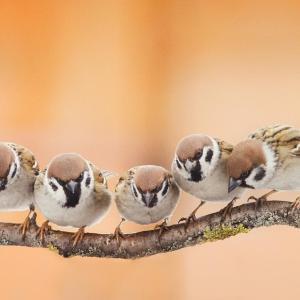 ロックダウンで参加者が倍増 今年のBig Garden Birdwatchでトップになった野鳥は?