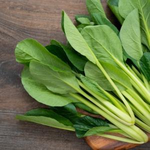 緑色パワーの小松菜