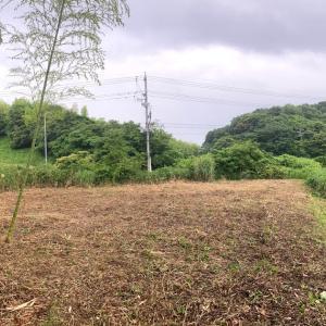 自宅の庭の観葉植物 鉢植えのドラセナの生命力が スゴイ(゚∀゚)