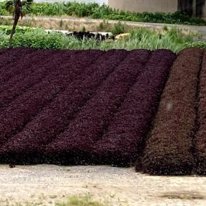 遠州浜松部品交換回で、竹伐採用のナタを格安でゲット(^o^)