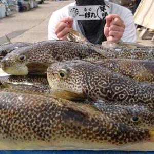 【すっごい】ひとつの節目な湾フグ実釣【滑るよ!】