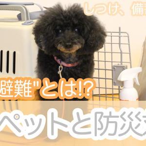 【ペットと防災】犬、猫、小動物、鳥、魚。動物種類ごとの防災対策