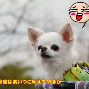 メジロを撮りに来たんです! (^^)v