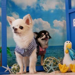 真夏のビーチで! (*^▽^*)