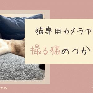 【猫専用】無料カメラアプリ「撮る猫」の使い方を解説!【にゃんこを撮ろう】