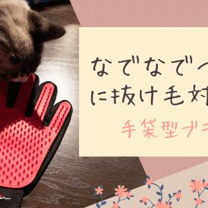 【初心者向け】猫の抜け毛対策のブラシは手袋型が使いやすくておすすめ!