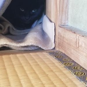 野良猫捕獲計画 命名