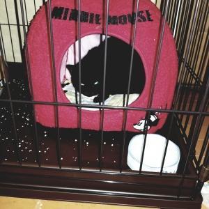 家庭内野良猫捕獲計画