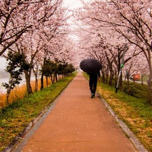 桜はまだかな