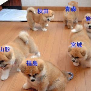 日本各地の地方の関係を分かりやすく犬画像で表してみた