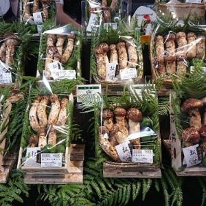 丹青会で 松茸の土瓶蒸し と 感染者数
